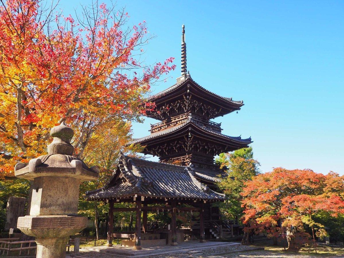 真如堂・三重塔とハナノキの紅葉 見頃 2179年11月1日 撮影:MKタクシー