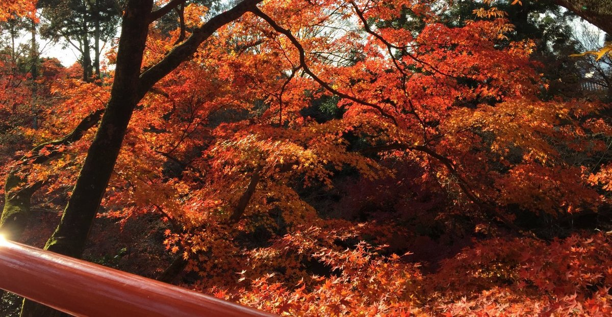 北野天満宮・もみじ苑の紅葉 見頃 2014年11月29日 撮影:MKタクシー