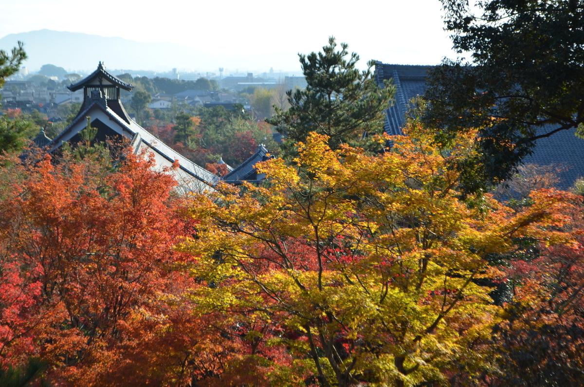 天龍寺・曹源池庭園の紅葉 見頃 2017年11月25日 撮影:MKタクシー