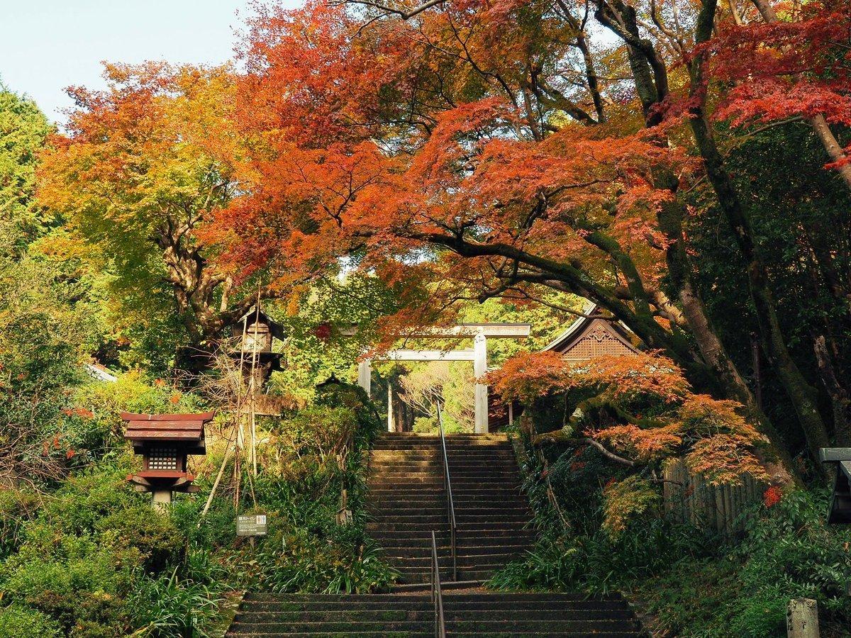 日向大神宮・鳥居と紅葉 見頃 2017年11月23日 撮影:MKタクシー