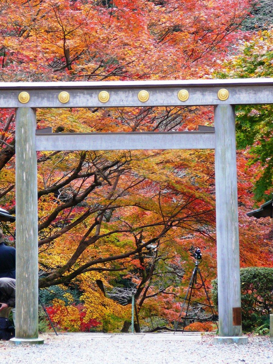日向大神宮・鳥居と紅葉 見頃 2006年12月3日 撮影:MKタクシー