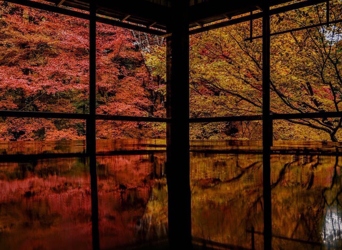 瑠璃光院・書院二階の紅葉 見頃 見頃 2017年11月20日 撮影:MKタクシー
