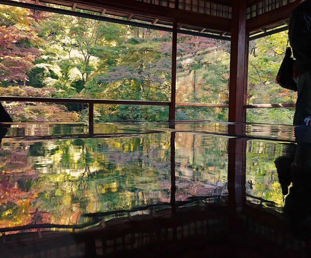 瑠璃光院・書院二階の紅葉 見頃近し 2016年11月13日 撮影:MKタクシー