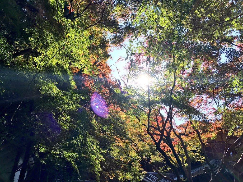 瑠璃光院の紅葉 見頃近し 2016年11月13日 撮影:MKタクシー