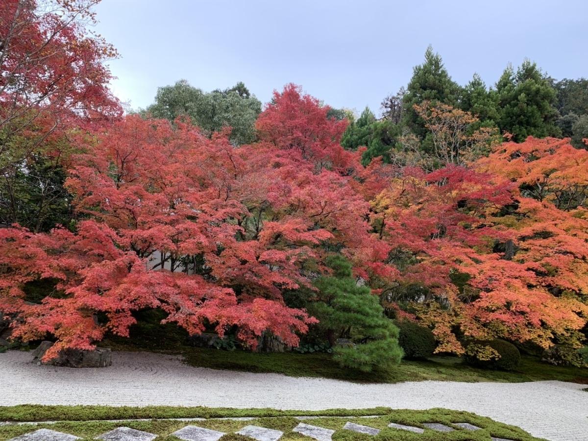 天授庵・方丈前庭の紅葉 見頃 2019年11月18日 撮影:MKタクシー