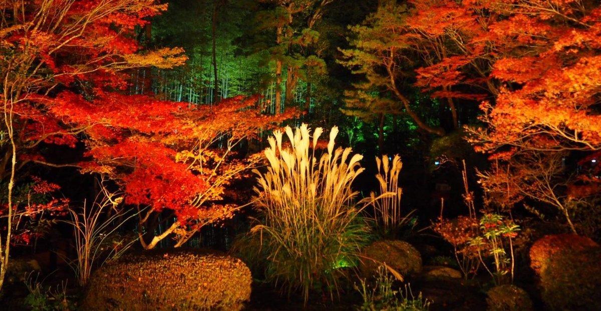 天授庵・方丈前庭の紅葉ライトアップ 見頃 2017年11月25日 撮影:MKタクシー