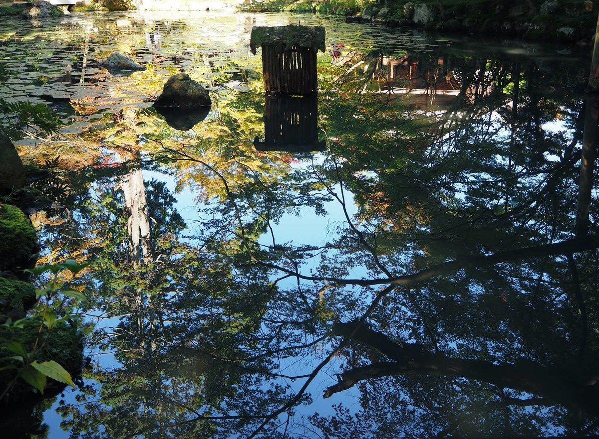 天授庵・書院南庭の紅葉 色づきはじめ 2017年11月1日 撮影:MKタクシー