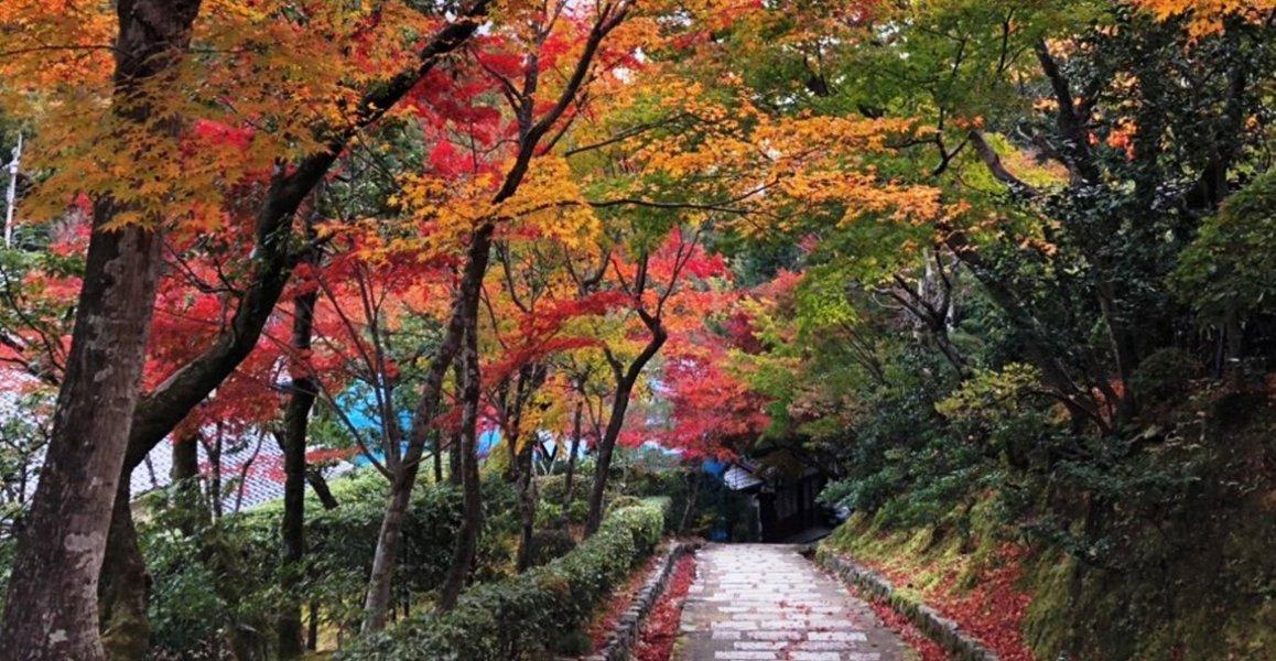 化野念仏寺・参道の紅葉 見頃 2018年11月23日 撮影:MKタクシー