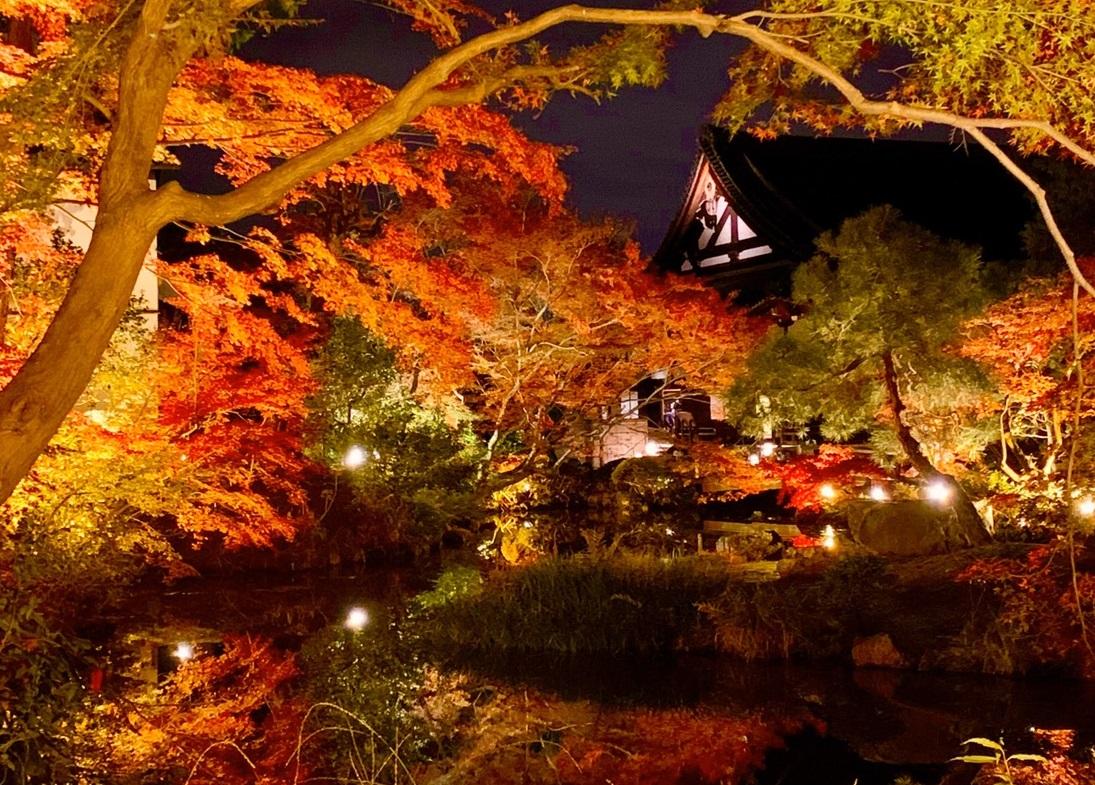 金戒光明寺・紫雲の庭の紅葉ライトアップ 見頃 2019年11月29日 撮影:MKタクシー