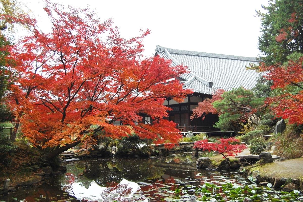 金戒光明寺・紫雲の庭の紅葉 見頃 2007年11月29日 撮影:MKタクシー
