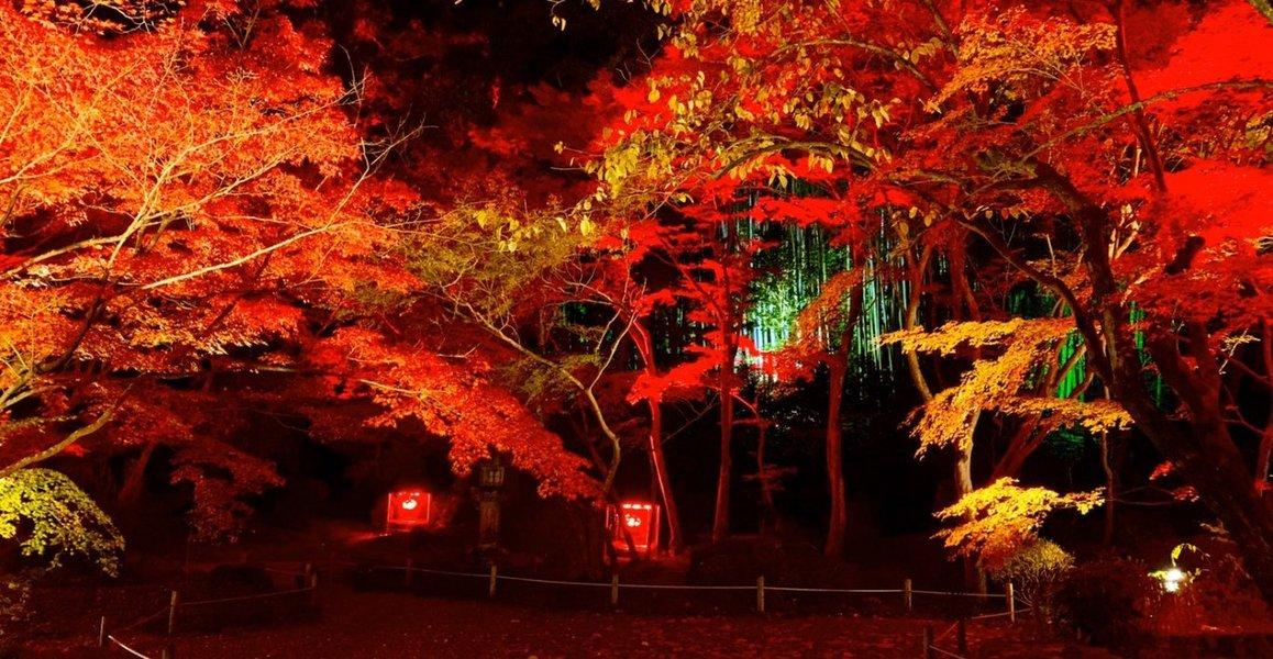 石山寺の紅葉ライトアップ 2019年11月19日 撮影:MKタクシー
