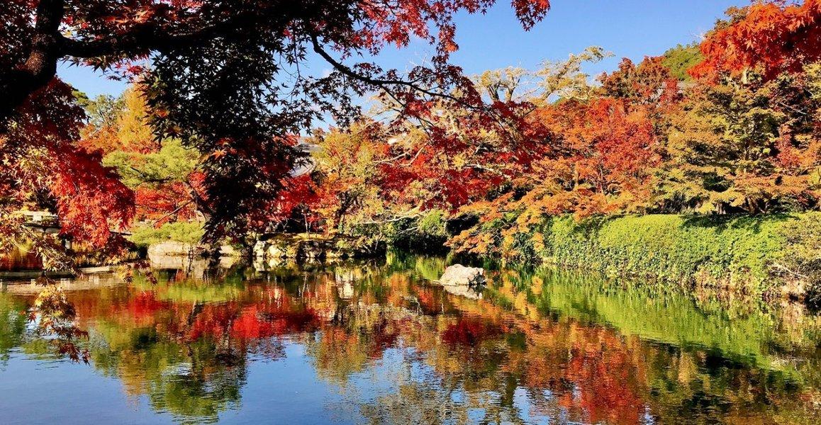 永観堂の紅葉 2020年11月11日 撮影:MKタクシー