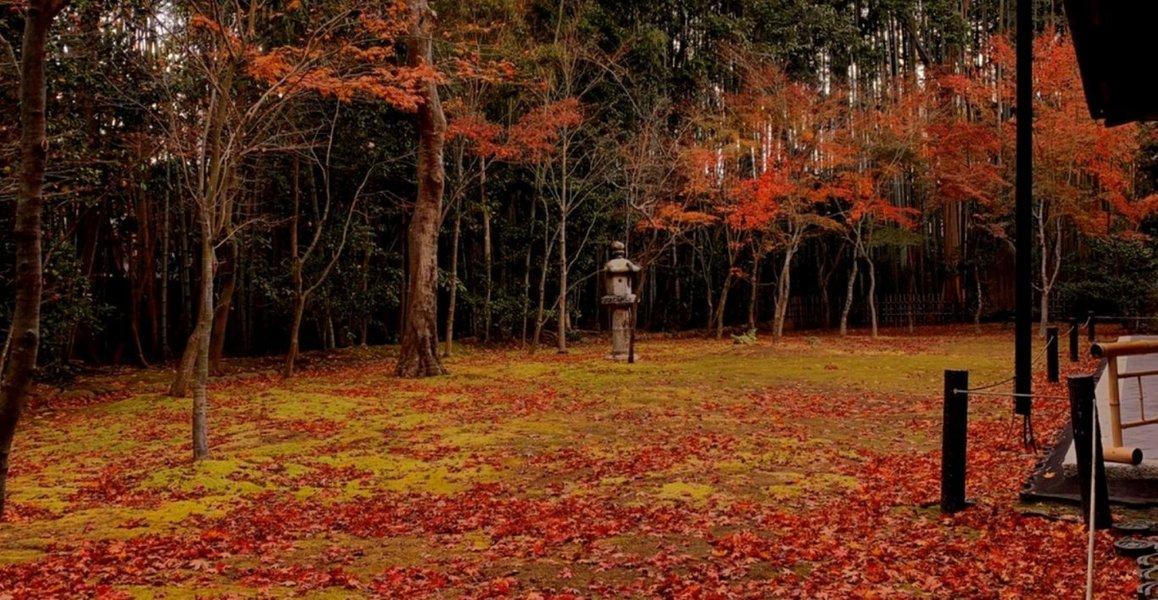 高桐院・楓の庭の紅葉 散りはじめ 2019年12月5日 撮影:MKタクシー
