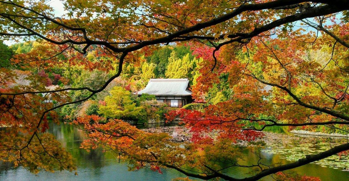 龍安寺・鏡容池庭園の紅葉 見頃 2017年11月24日 撮影:MKタクシー