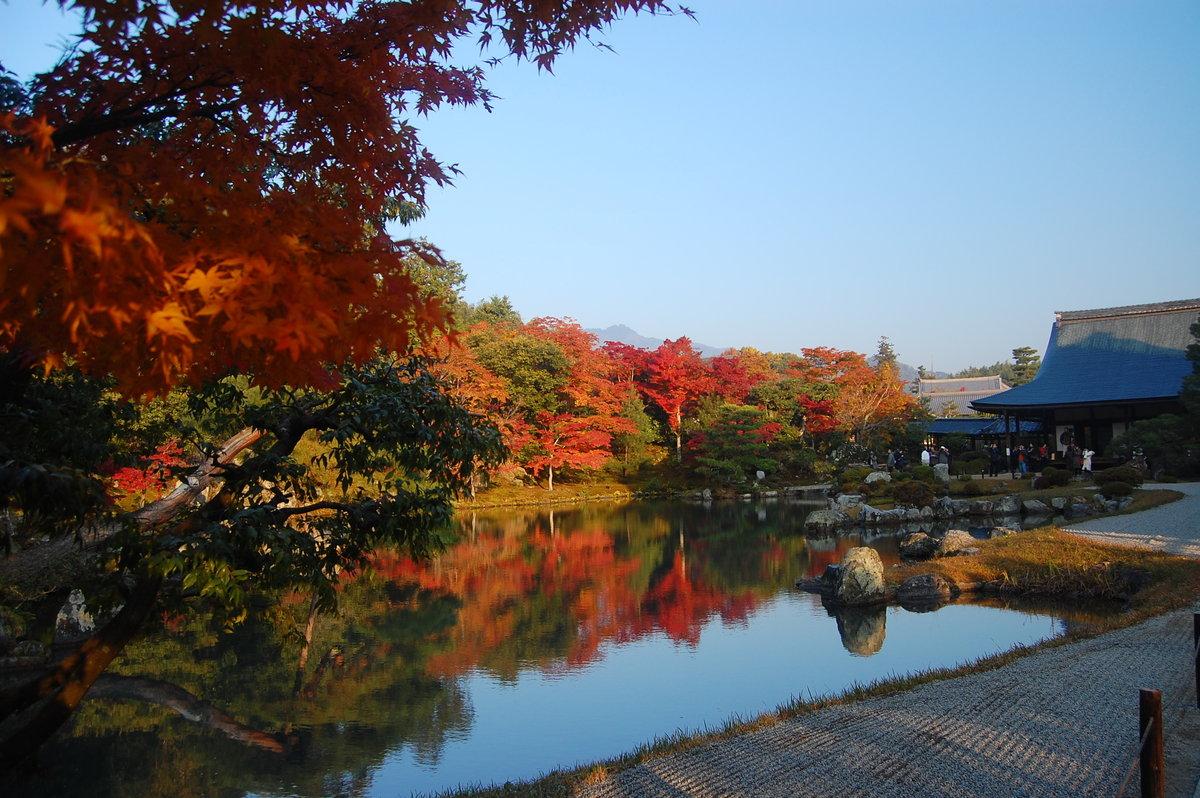 天龍寺・曹源池庭園の紅葉 見頃 2007年11月25日 撮影:MKタクシー