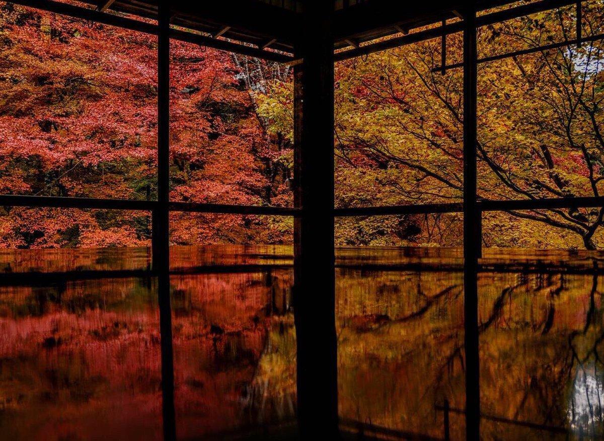 青龍殿の紅葉 見頃 2017年11月20日 撮影:MKタクシー
