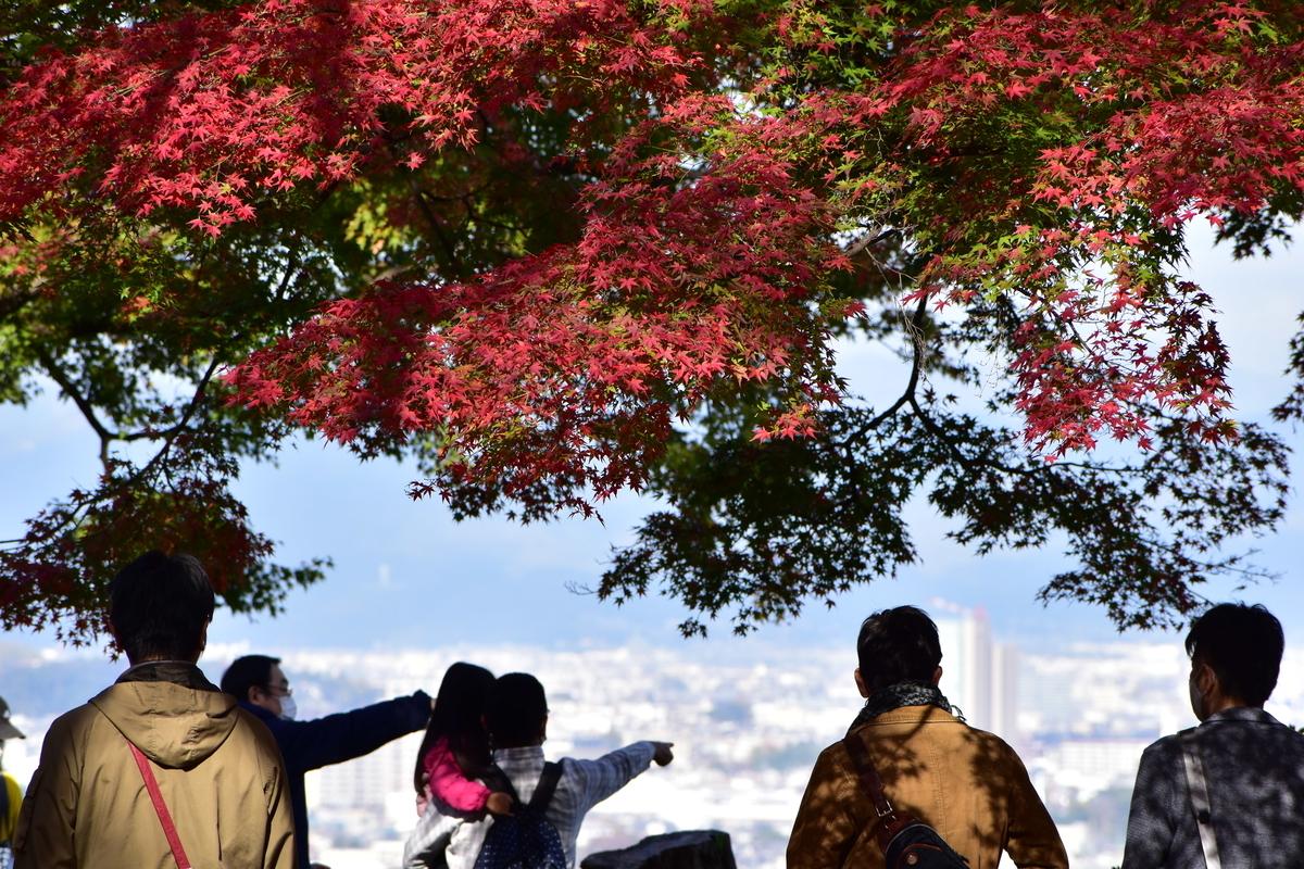 石清水八幡宮・展望台の紅葉 見頃 2020年11月22日 撮影:MKタクシー