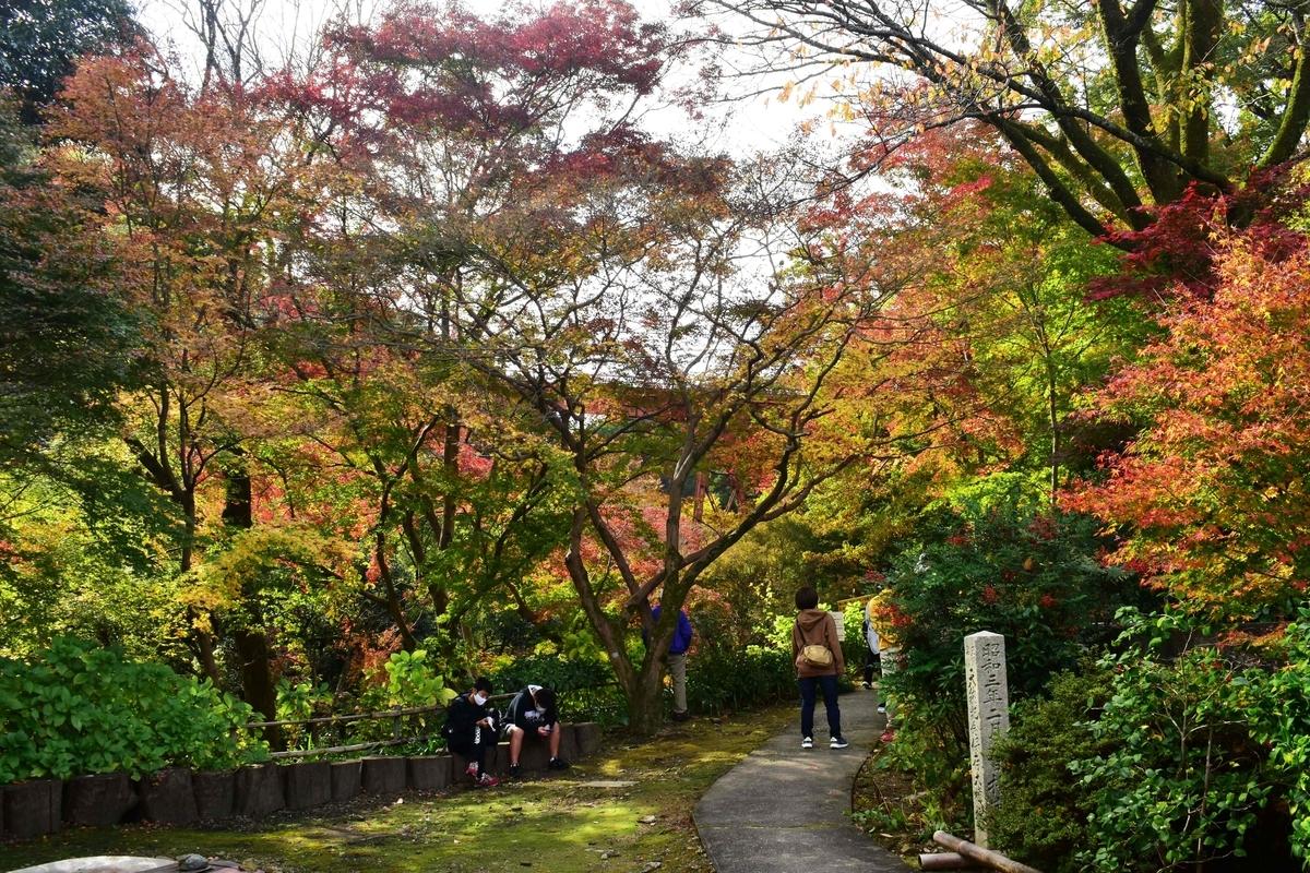 神応寺の紅葉 見頃 2020年11月22日 撮影:MKタクシー