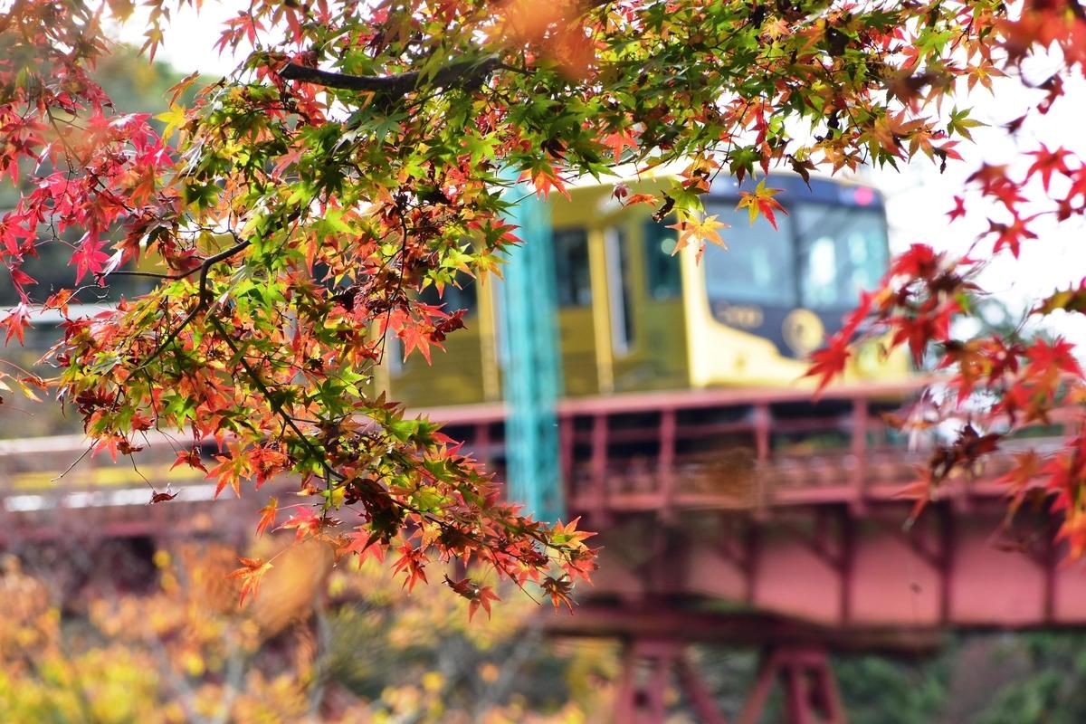 石清水八幡宮参道ケーブル・神応寺奥からの紅葉と「こがね」 見頃 2020年11月22日 撮影:MKタクシー