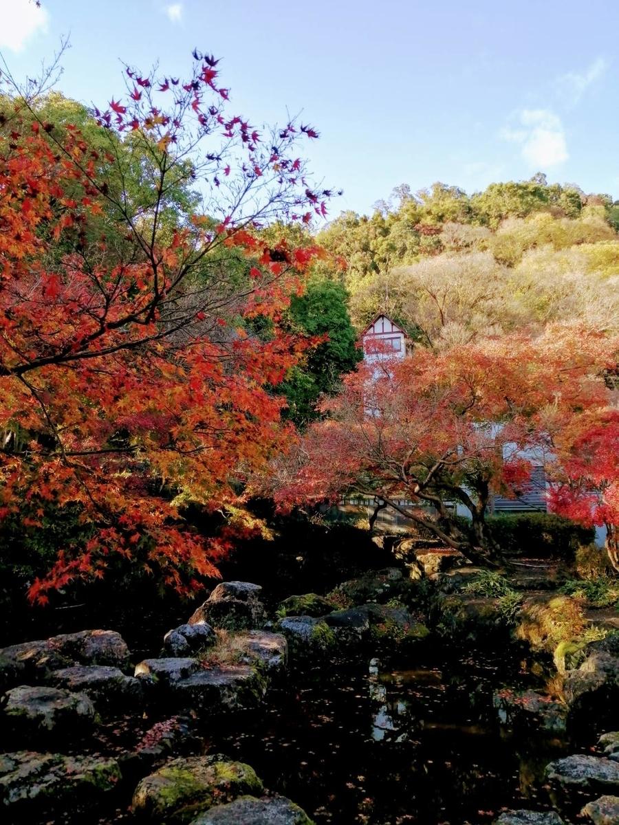 大山崎山荘美術館の紅葉 見頃 2020年11月23日 撮影:MKタクシー