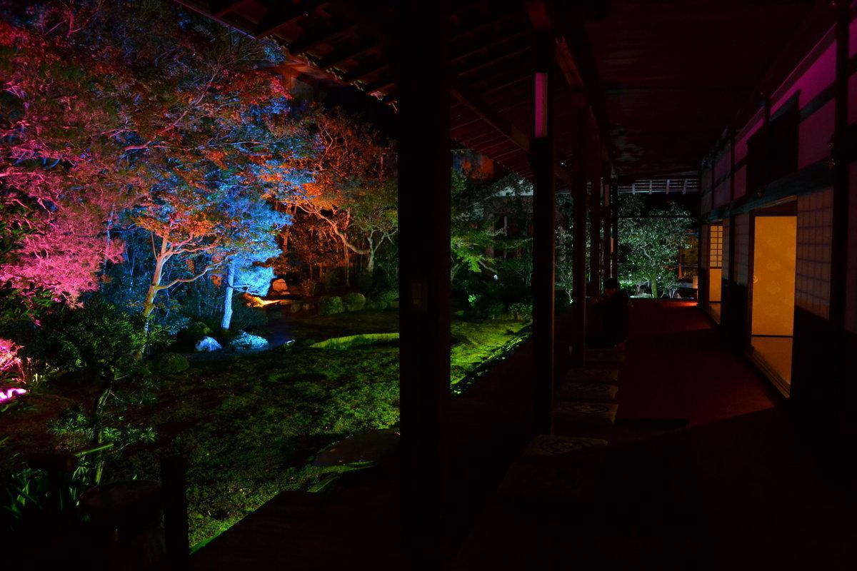 本法寺・巴の庭の紅葉ライトアップ 見頃 2017年11月11日 撮影:MKタクシー