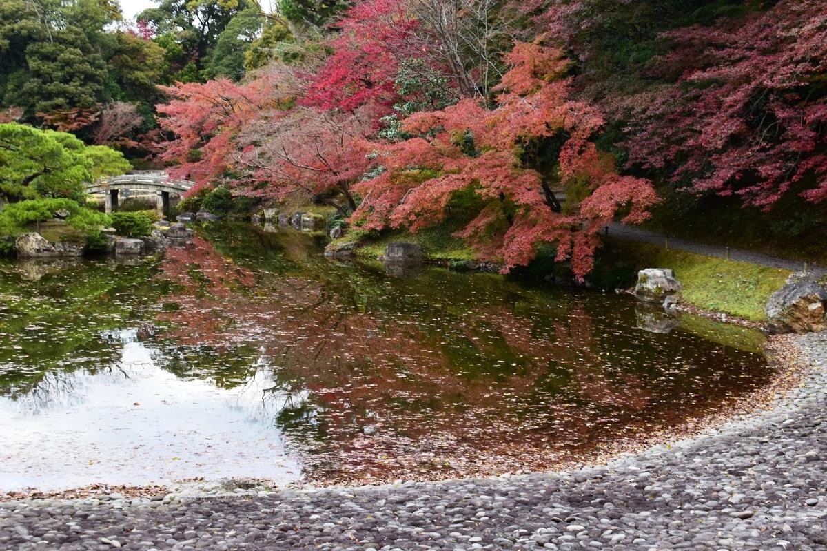 仙洞御所・南池の紅葉 散りはじめ 2020年11月26日 撮影:MKタクシー