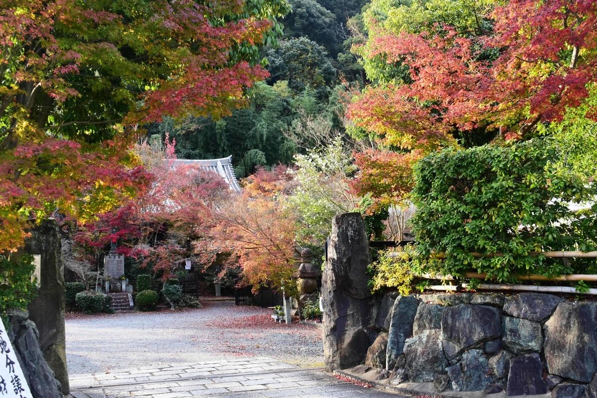 善法律寺の紅葉 散りはじめ 2020年11月29日 撮影:MKタクシー