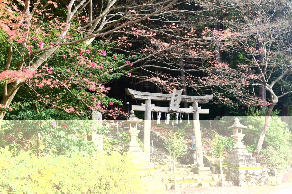 大道神社の紅葉 散りはじめ 2020年11月29日 撮影:MKタクシー