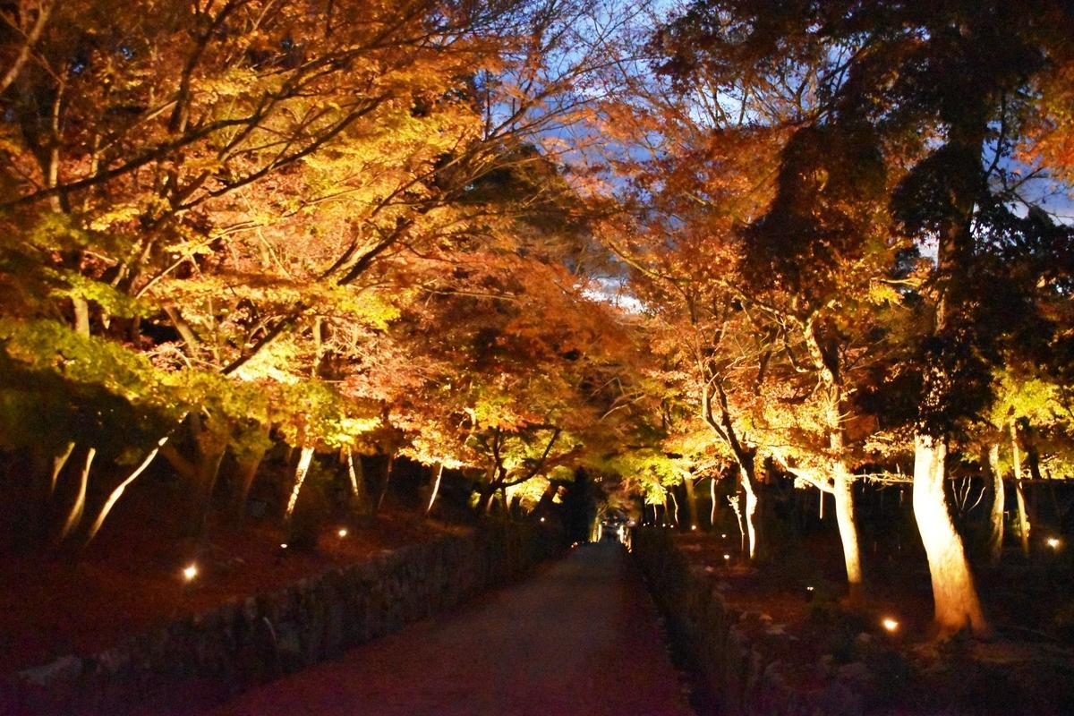 興聖寺の紅葉ライトアップ 散りはじめ 2020年11月28日 撮影:MKタクシー