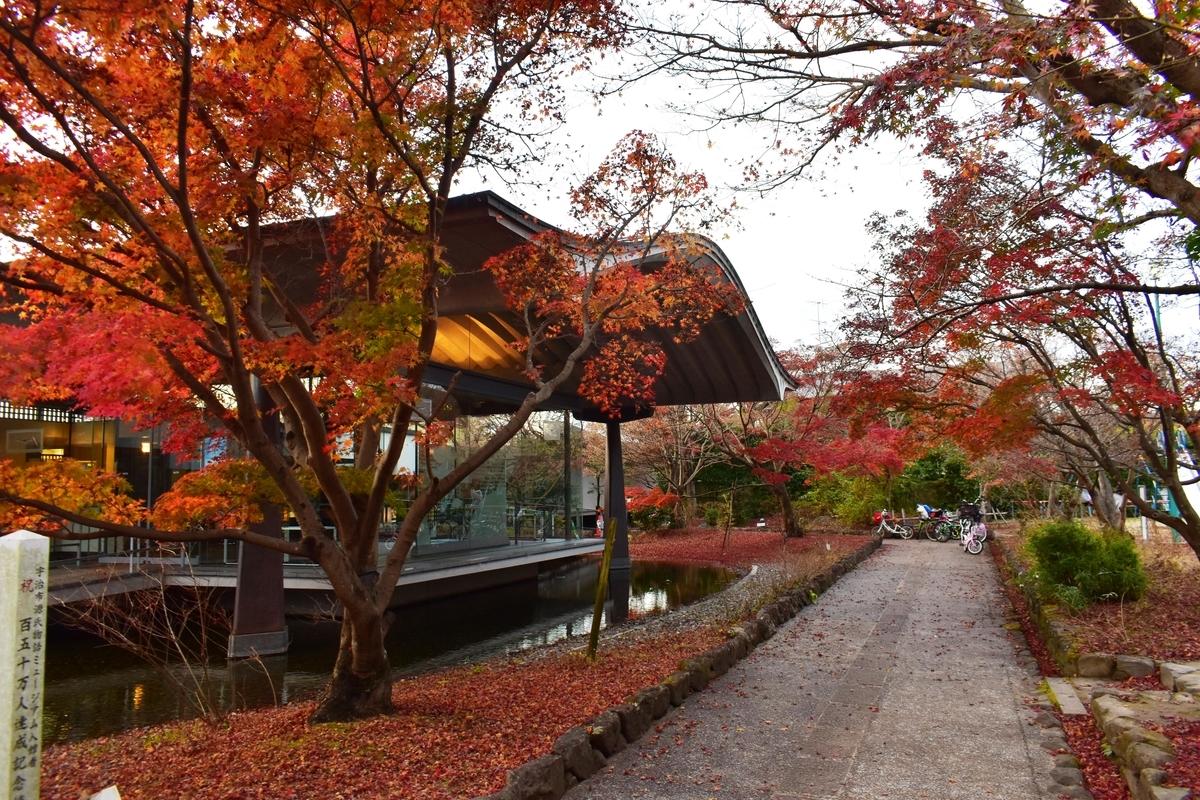 源氏物語ミュージアムの紅葉 散りはじめ 2020年11月28日 撮影:MKタクシー