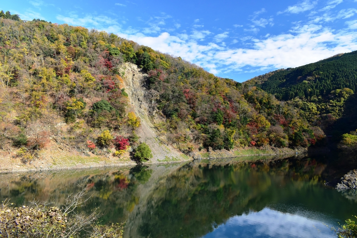 天ヶ瀬ダム湖・鳳凰湖の紅葉 見頃 2020年11月28日 撮影:MKタクシー