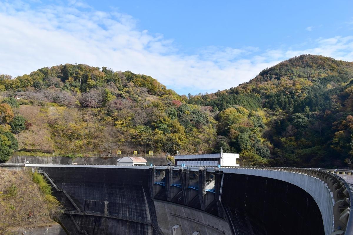天ヶ瀬ダムの紅葉 見頃 2020年11月29日 撮影:MKタクシー