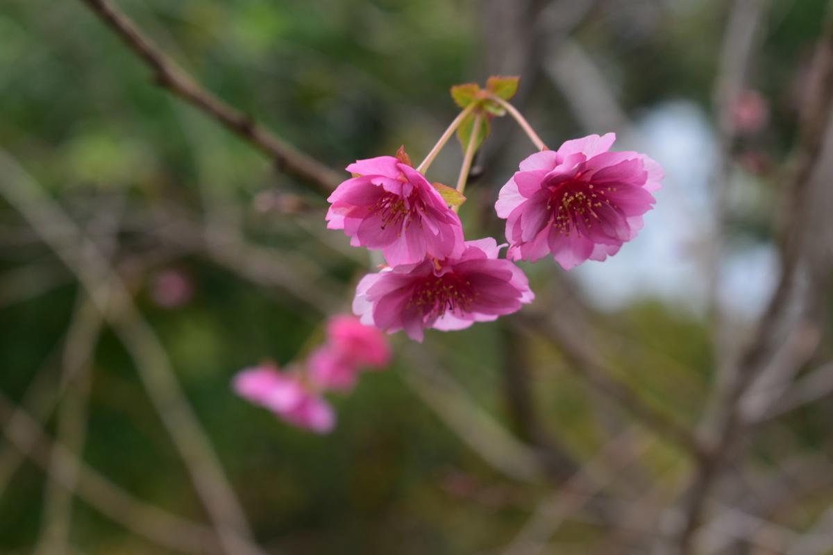 エレガンスみゆき 京都府立植物園 2020年11月26日 撮影:MKタクシー