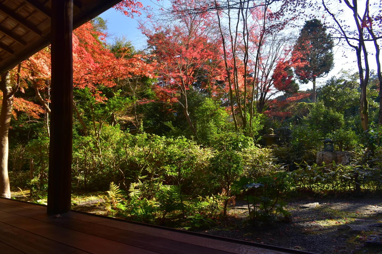 来迎院・含翠庭の紅葉 見頃 2020年12月2日 撮影:MKタクシー