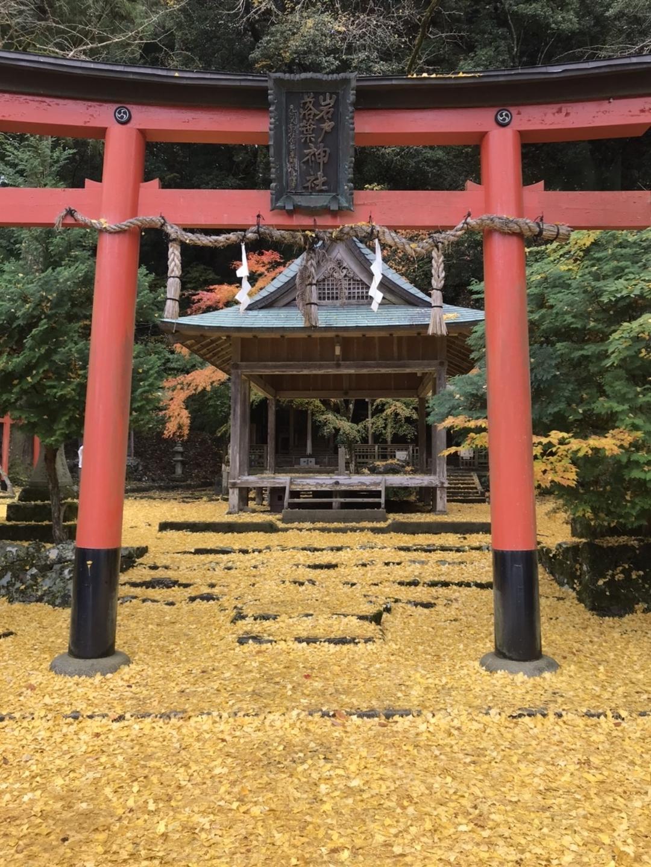 岩戸落葉神社のイチョウ 散りはじめ 見頃 2020年11月20日 撮影:MKタクシー