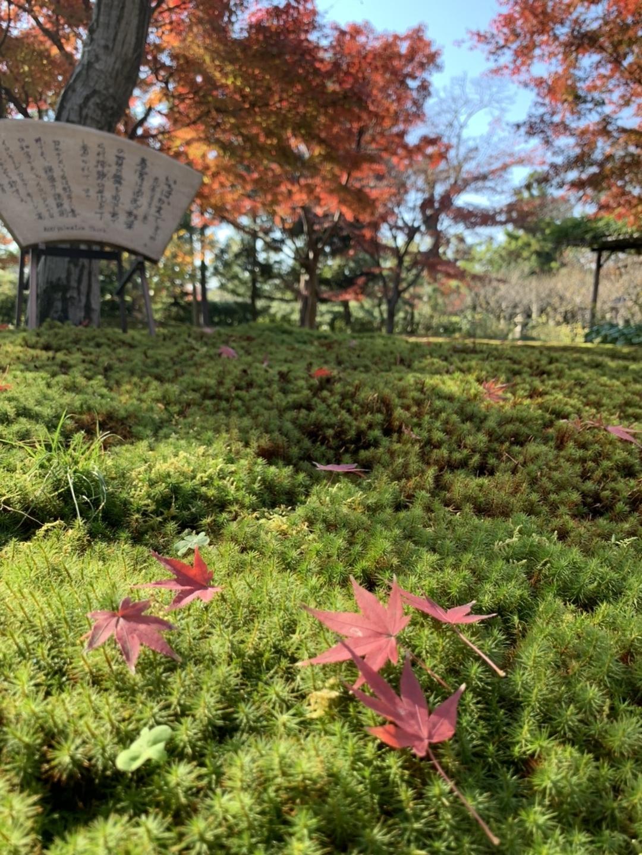 城南宮・平安の庭の紅葉 散りはじめ 見頃 2020年12月5日 撮影:MKタクシー