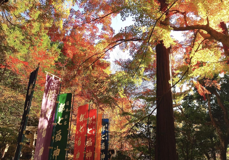 赤山禅院・参道の紅葉 見頃 2020年11月21日 撮影:MKタクシー