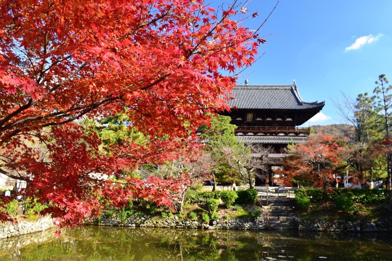 萬福寺・山門の紅葉 散りはじめ 2020年12月5日 撮影:MKタクシー