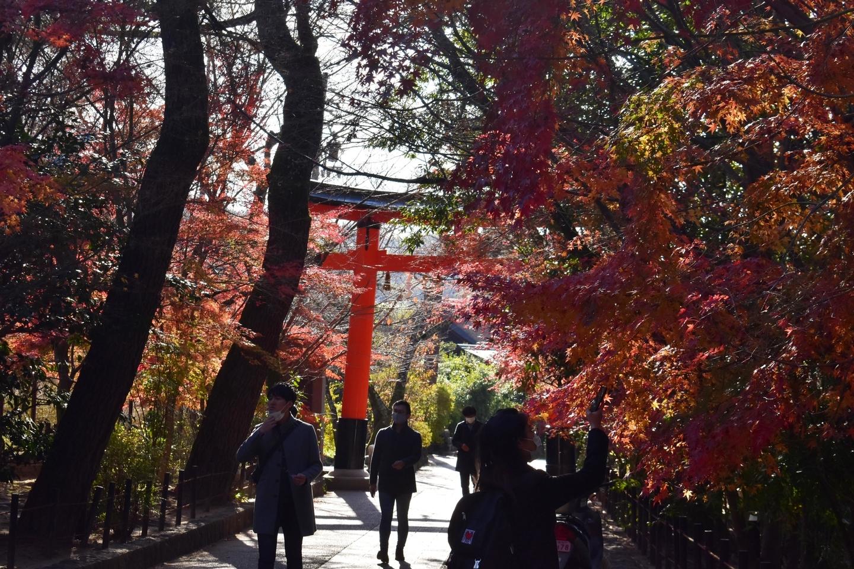 宇治上神社の紅葉 散りはじめ 2020年12月5日 撮影:MKタクシー