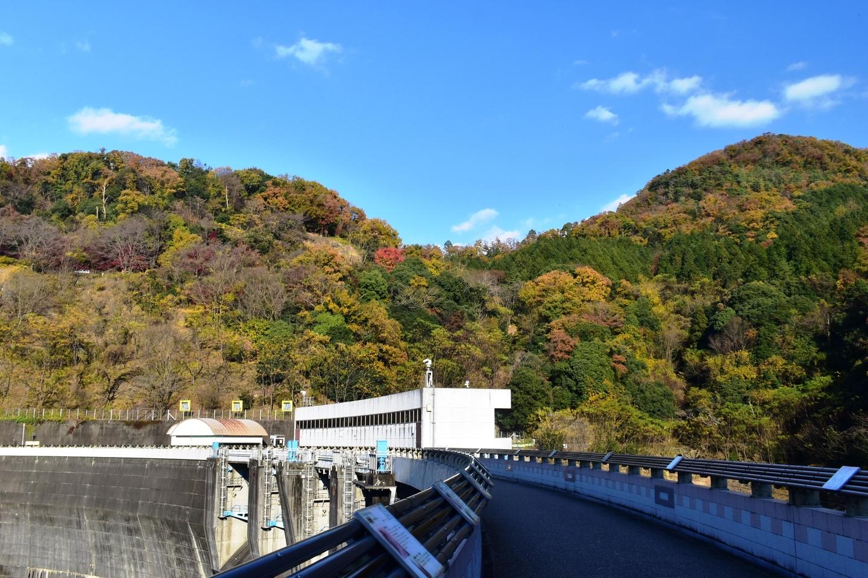天ヶ瀬ダムの紅葉 見頃 2020年12月5日 撮影:MKタクシー