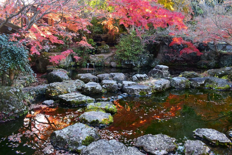 大山崎山荘の紅葉 散りはじめ 2020年12月5日 撮影:MKタクシー