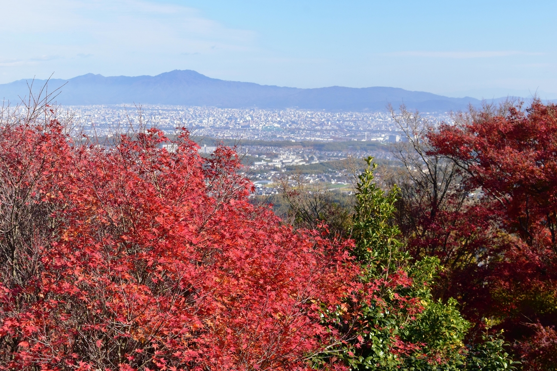 三鈷寺の紅葉 散りはじめ 2020年12月5日 撮影:MKタクシー