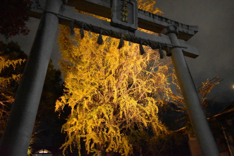 三栖神社・イチョウのライトアップ 見頃 2020年12月14日 撮影:MKタクシー