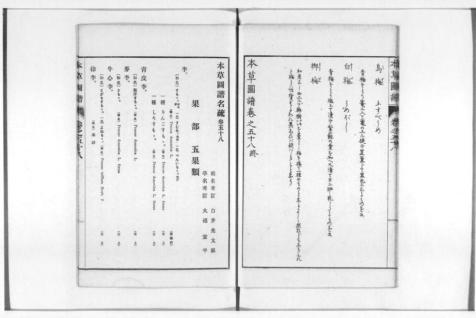1916年本草図譜刊行会発行「本草図譜」出展:国立国会デジタル図書館