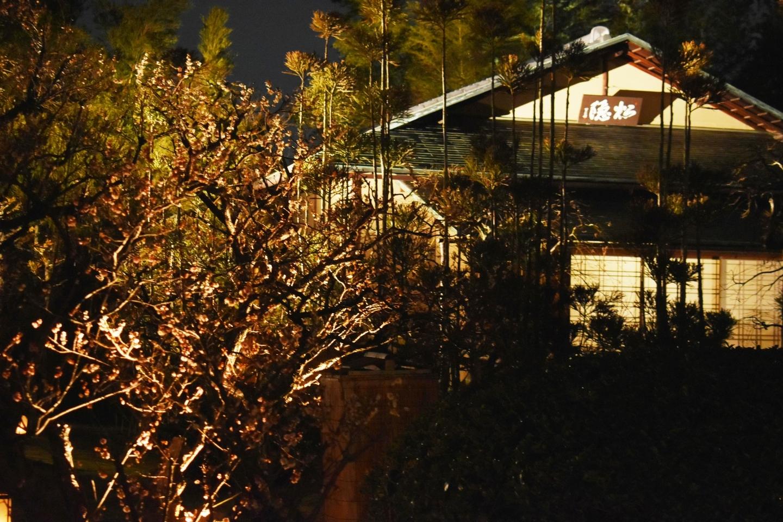 梅の香かおる 松花堂庭園ライトアップ 終わり近し 2021年3月7日 撮影:MKタクシー
