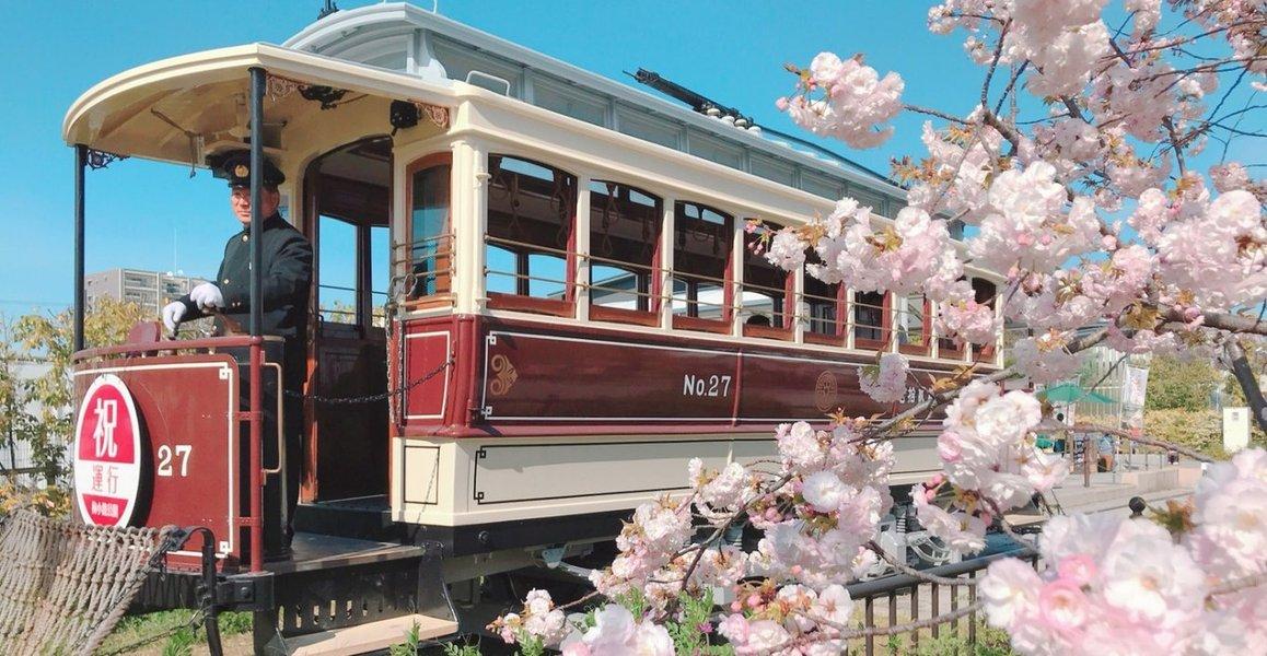 桜とチンチン電車 見頃 2019年4月13日(平年4月12日相当) 撮影:MKタクシー