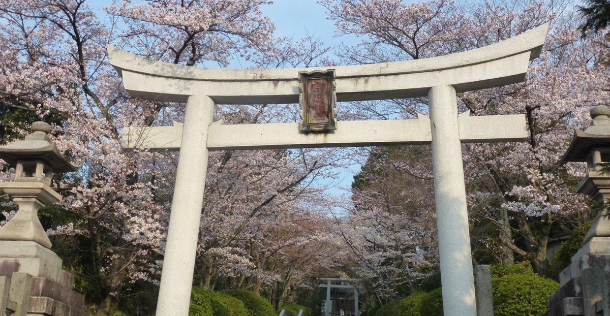ソメイヨシノ 見頃 2012年4月10日(平年4月6日相当) 撮影:MKタクシー