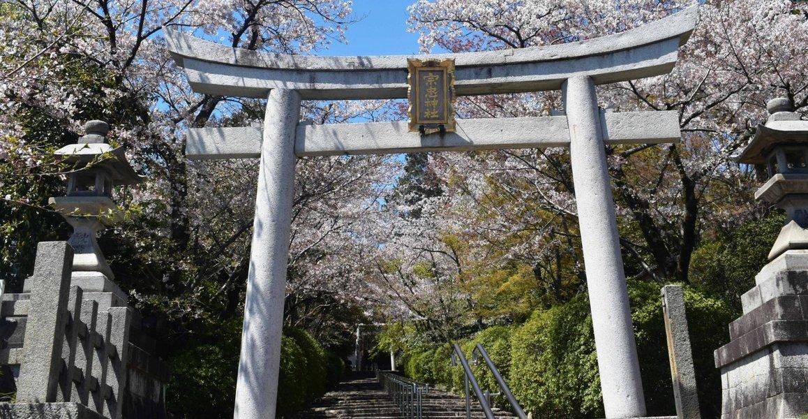 ソメイヨシノ 散りはじめ 2019年4月13日(平年4月12日相当) 撮影:MKタクシー