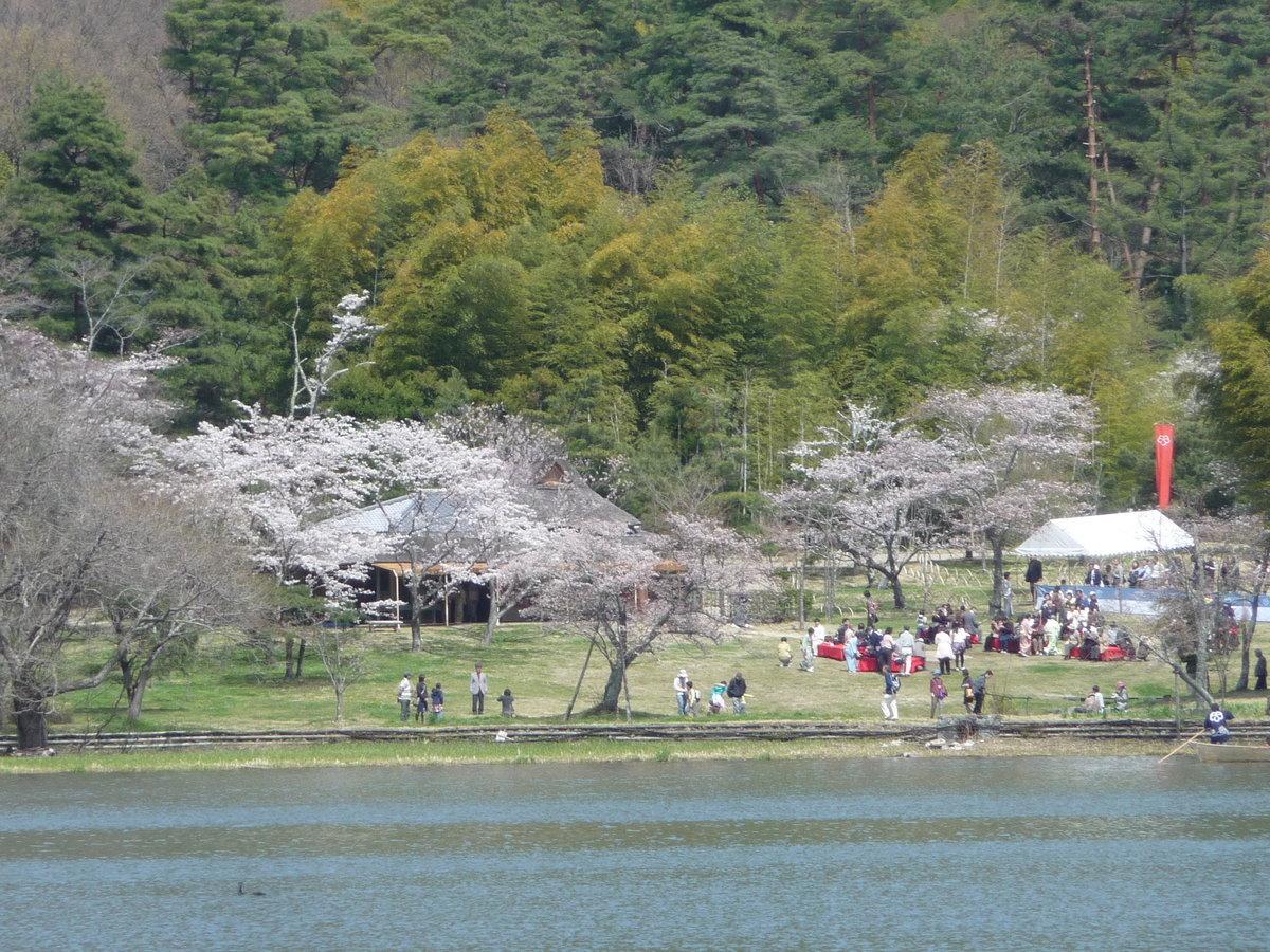 広沢池の対岸から見た枝垂桜 見頃 2010年4月4日(平年4月8日相当) 撮影:MKタクシー