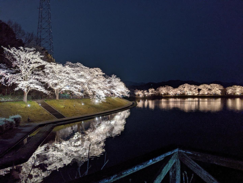 平の沢池の夜桜ライトアップ